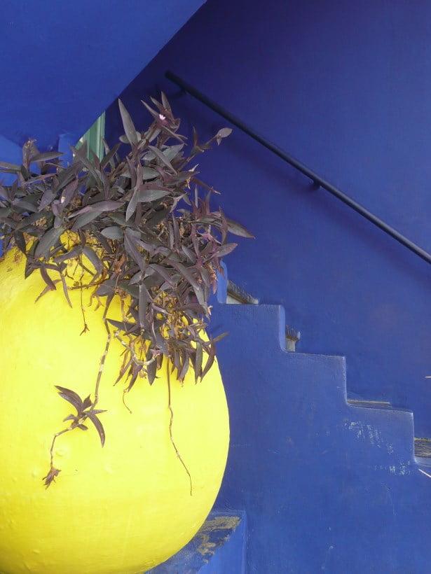 Jardin Majorelle - Majorelle blue with yellow pot