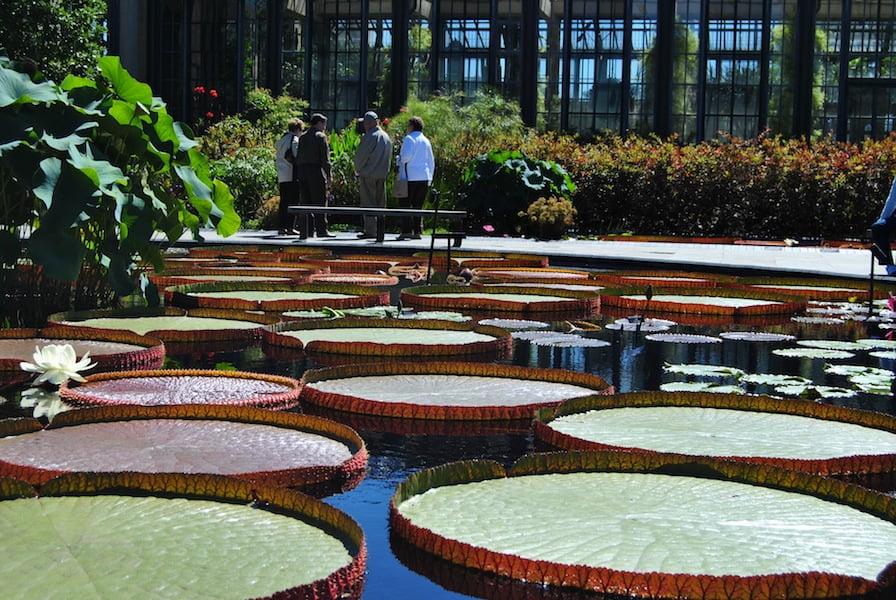 Longwood Gardens USA 013