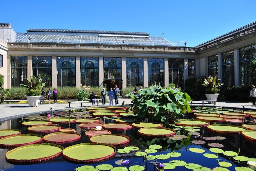 The water lily pond at Longwood Gardens