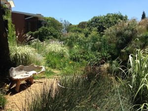 a garden that is wild, reflecting a typical natural high-veld scene, attracting as many birds and wildlife as possible