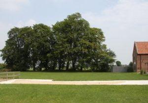 smooth-leafed elms