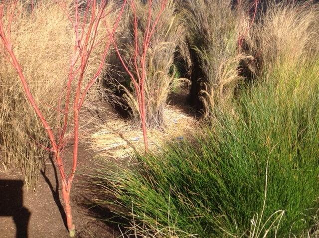 A (slightly) beige bit of garden at Australian Garden Show Sydney 2013. Design Christopher Owen