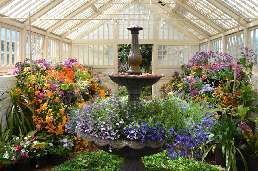 Colourful annuals in the conservatory at Entally House Tasmania