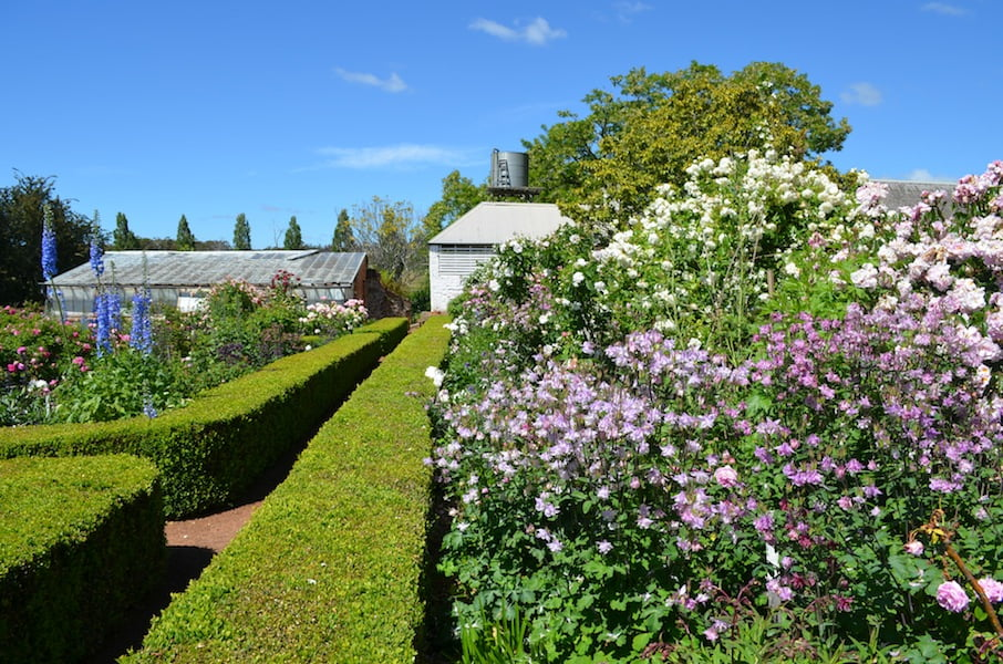 Cool climate plants thrive at Entally House Tasmania