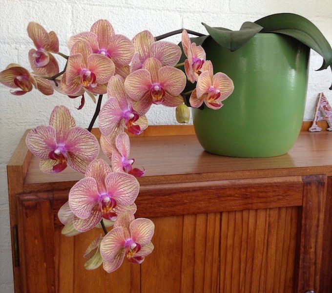 my first orchid experience