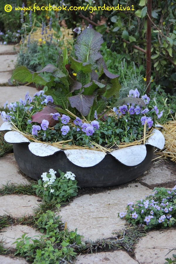 A container made out of an old tyre. Red mustard and blue pansies cohabiting happily