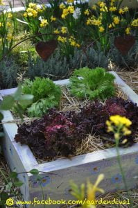 I wanted to create quirky veg planters for this family garden. This can be done as a family project