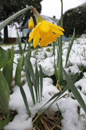 Waiting for spring. Photo Eli Duke