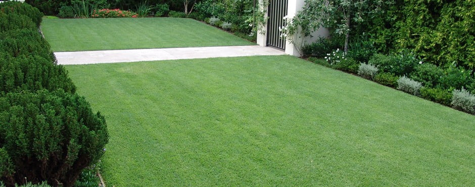 Lawn of Zoysia Empire™