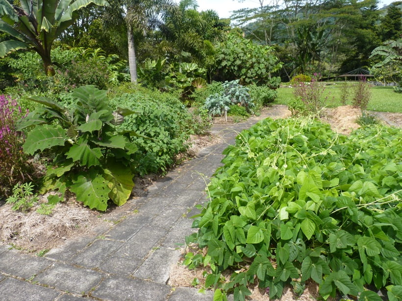 The veggie beds today