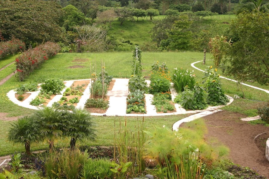 My newer in-ground veggie beds divided by walkways, 2007