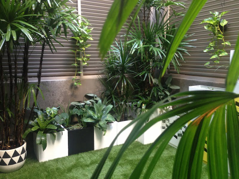 A courtyard for a special girl gardendrum for Courtyard designs melbourne