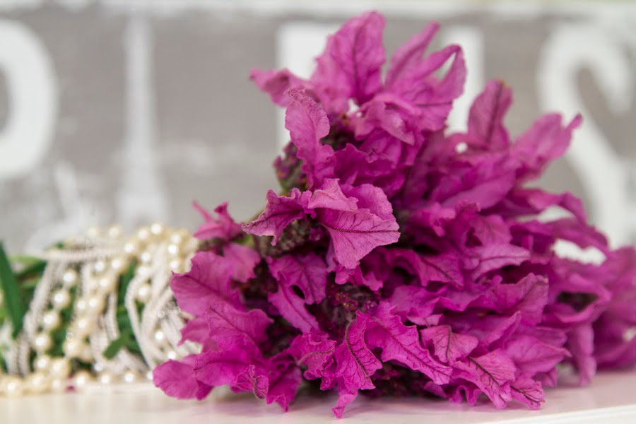 If your hosts plant out your gift of The Princess Lavender they'll have cut flowers for weeks