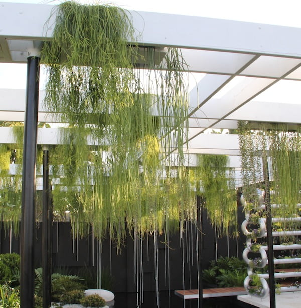 Rhipsalis are used to great effect in Brendan's Show Garden
