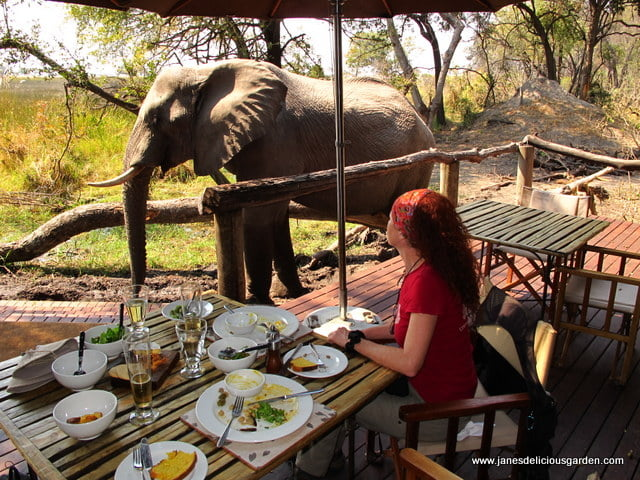 Siting next to the elephant hoovering up some berries