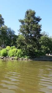 Impressive dark conifers at the lake's edge