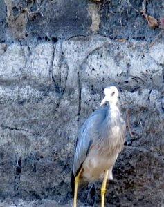 Water bird on the lake's edge