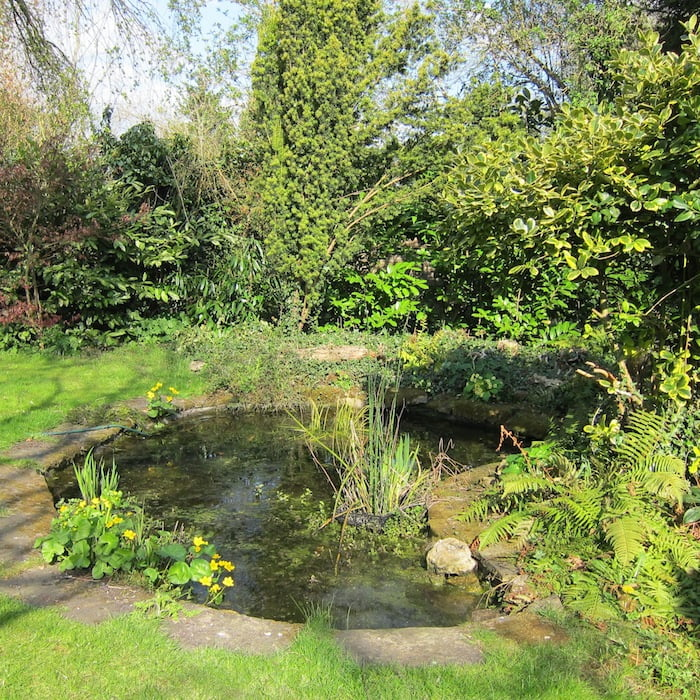 My back garden pond