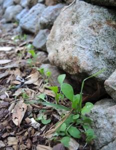 Rocket sprouting along wall