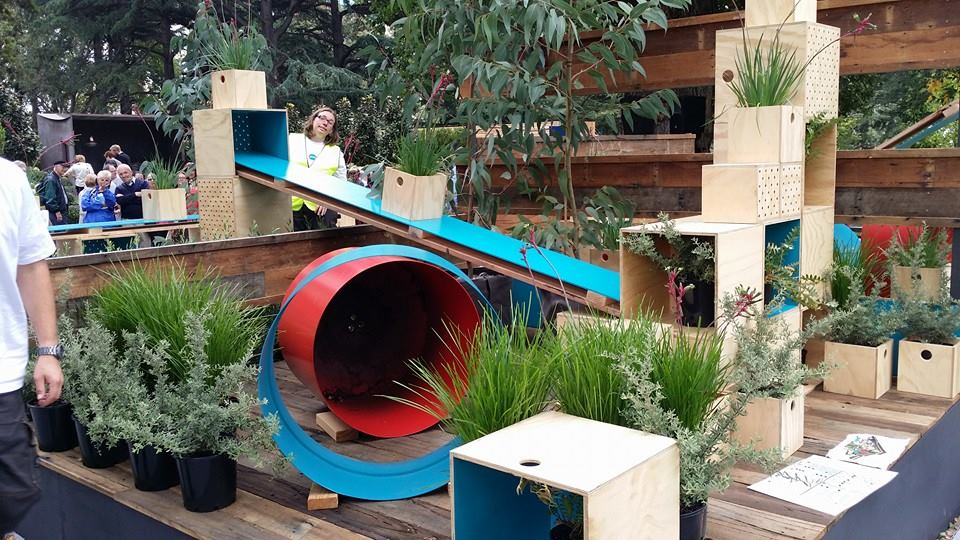Anigozanthos Playground by Botanical Traditions