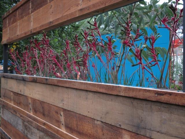 Anigozanthos screen Fresh Landscape Design