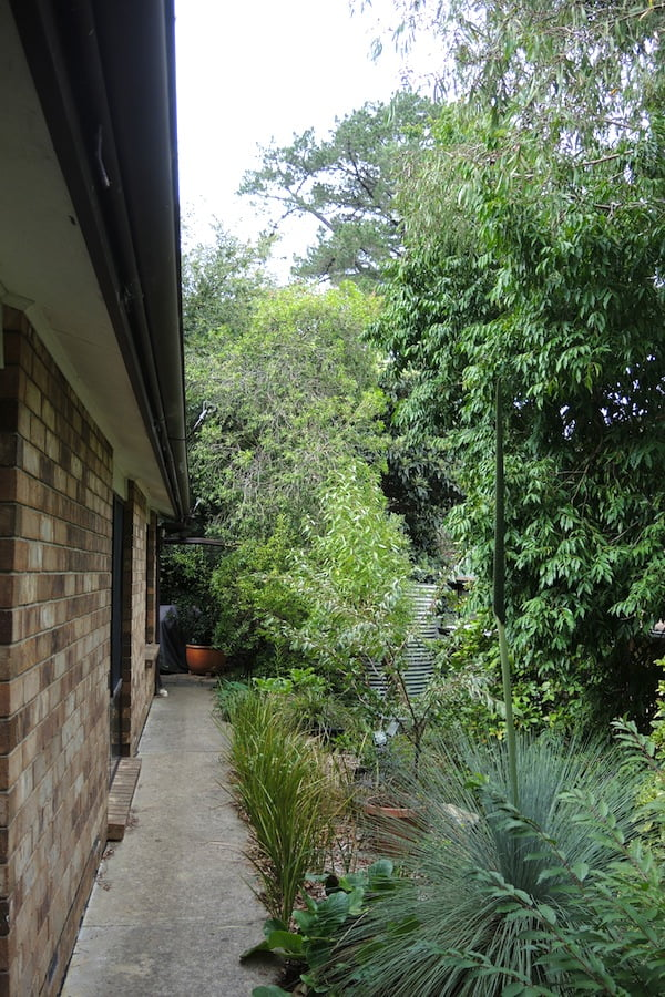 Our boundary fence is protected with lush vegetation