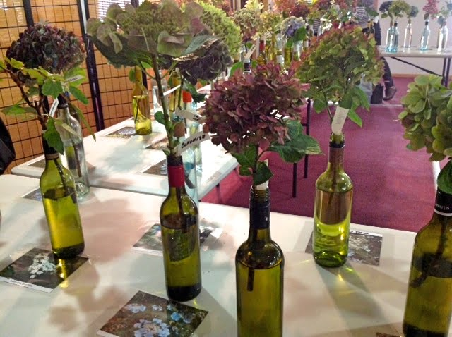 Hydrangeas at the Collectors' Plant Fair