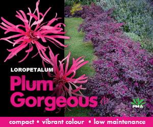 PlumGorgeous_GardenDrum