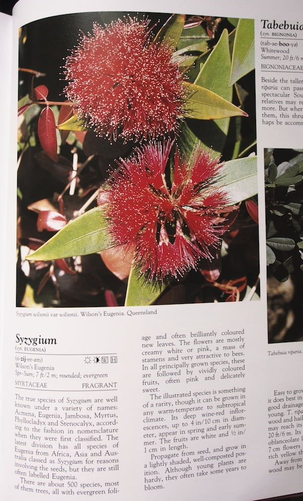 What Shrub Is That? Syzygium entry