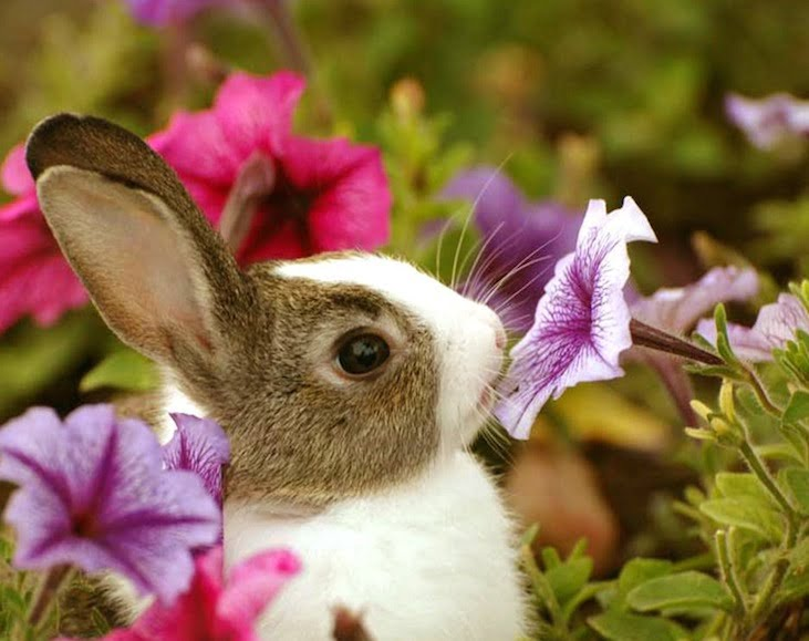 rabbit-in-the-garden-animal-wallpaper