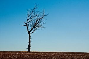 800px-Gone_Driveabout_28,_Drought_in_the_Wheatlands,_Western_Australia,_25_Oct._2010_-_Flickr_-_PhillipC