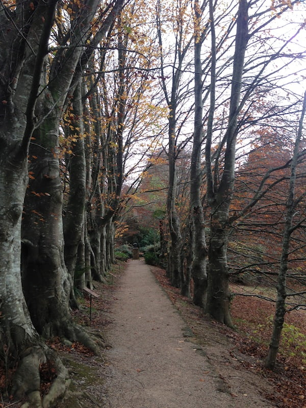 The beech walk