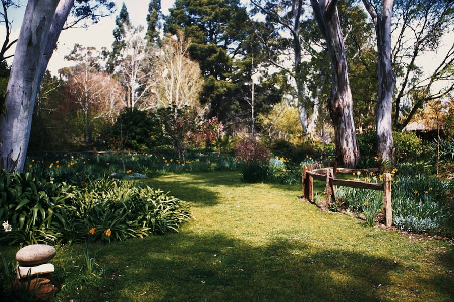 Difficulty of photographing a garden with dappled shade with bright sunlight