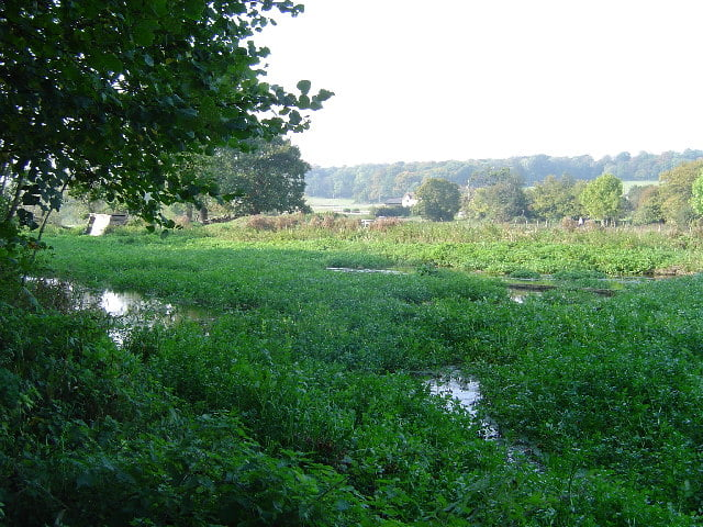 Natural watercress beds on the Chess River, UK. Photo Cathy Cox, geograph.org.uk