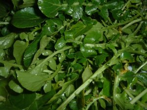 Watercress Photo by Masparasol