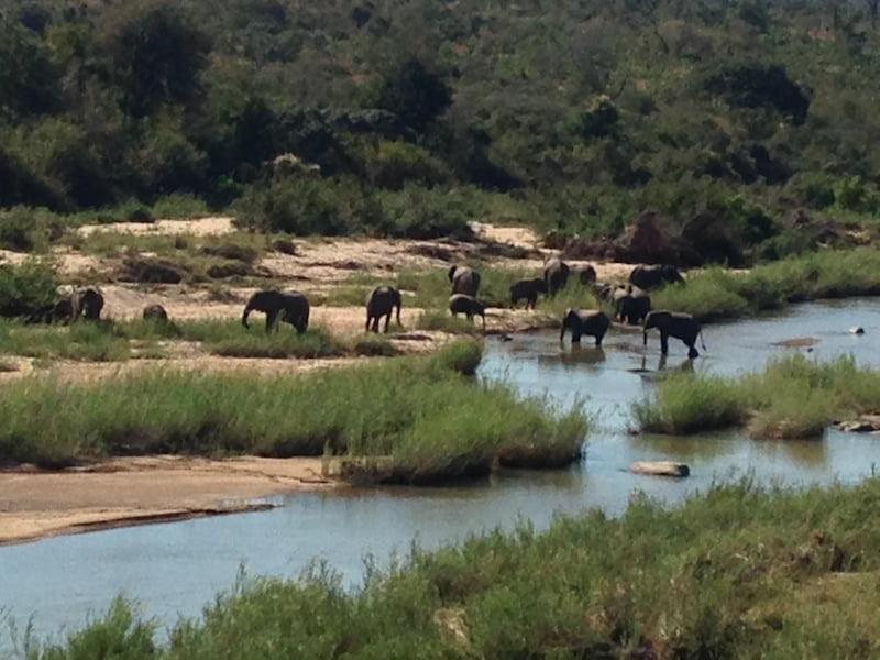 Elephants at Sabi Sands