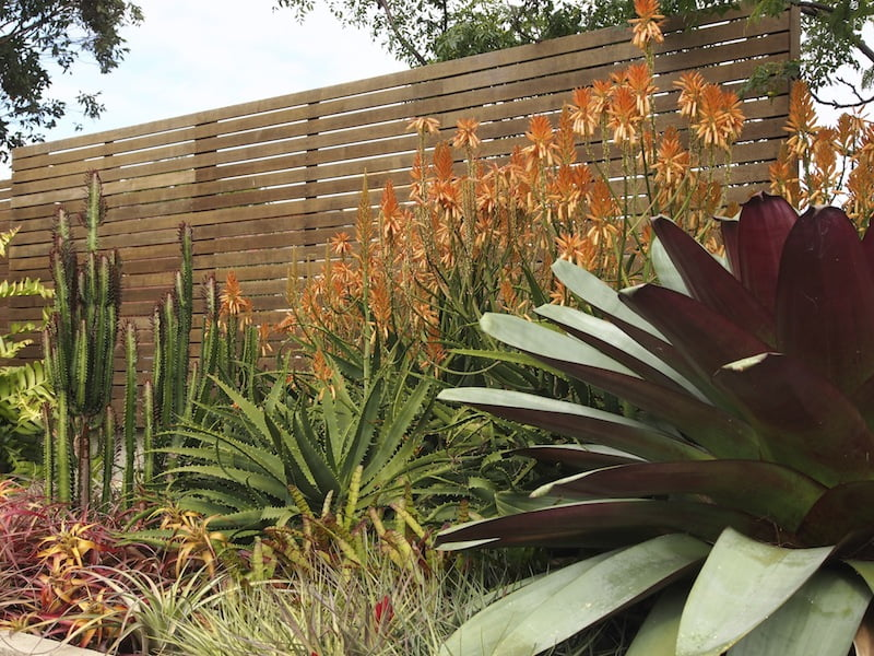 Majestic Alcantarea, Euphorbia, Dyckia, Tillandsia and aloes