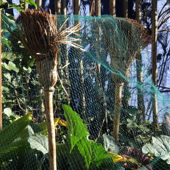 Recycled brooms in my garden (1)