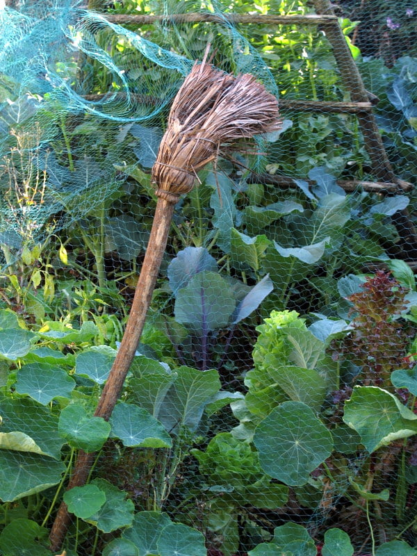Recycled brooms in my garden (5)