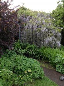 Beatrix Potter's garden7