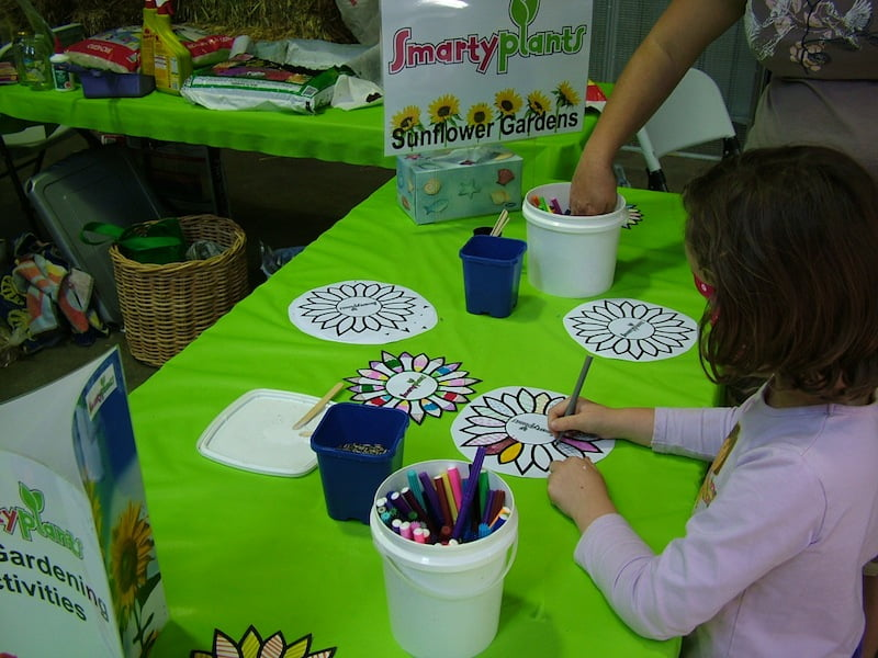 Decorating sunflowers ready to plant