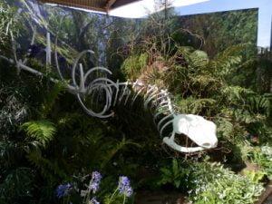 Chelsea Flower Show 2014 Kirstenbosch garden.