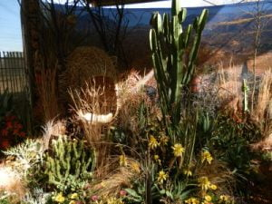 Chelsea FS Kirstenbosch garden