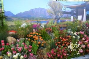Kirstenbosch-SA Chelsea Exhibit at Garden World. Photo by Magriet, Garden World.