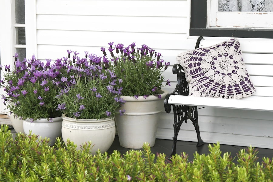 Lavender Lace collection