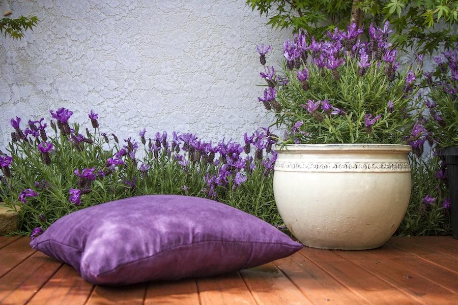 Lavender Winter Lace