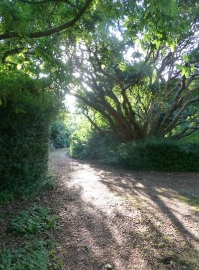 Dr. Paton's drive at Belmont, Longford- he was a LHS leader.  Where might that old strawberry tree and other exotics have come from?