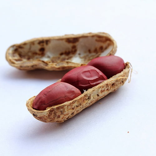 Triple peanut in shell. Photo by RMT