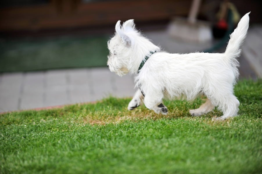 Pets_and_lawns_GardenDrum_July2014