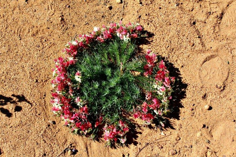Wreath flower 2_Morowa_Aug 2014
